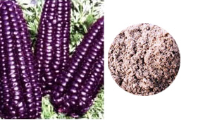 Raw Wild Purple Corn Flour  500g